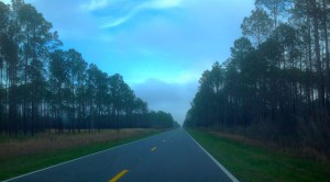 Apalachicola Forest